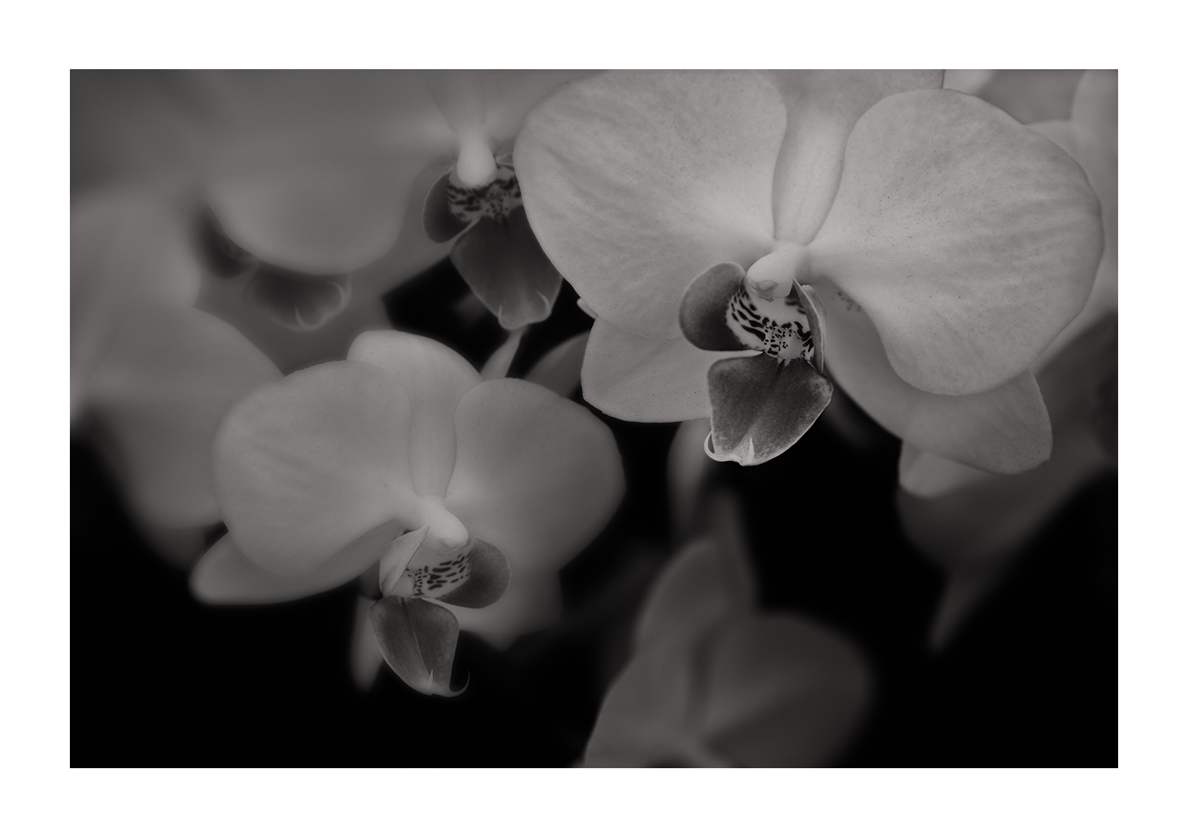 20170221_S_VV_Orchids_0008_ORCHID_WebSRGB_FINAL_V2